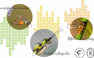 Szavazz te is a következő Év rovarára