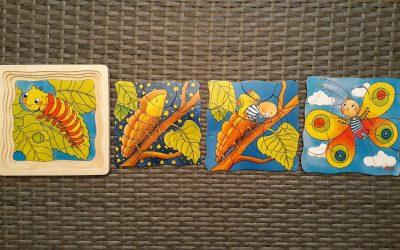 Pillangó fejlődése – réteg puzzle