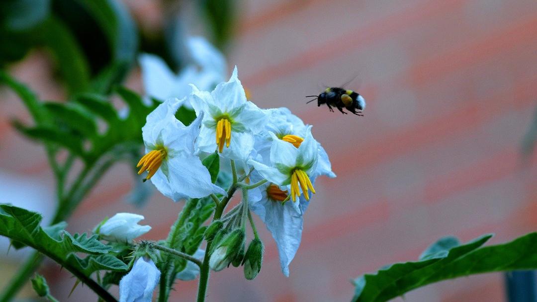 """""""Mesék a Zümmögő birodalomból"""" – írj egy mesét a beporzó rovarokról"""