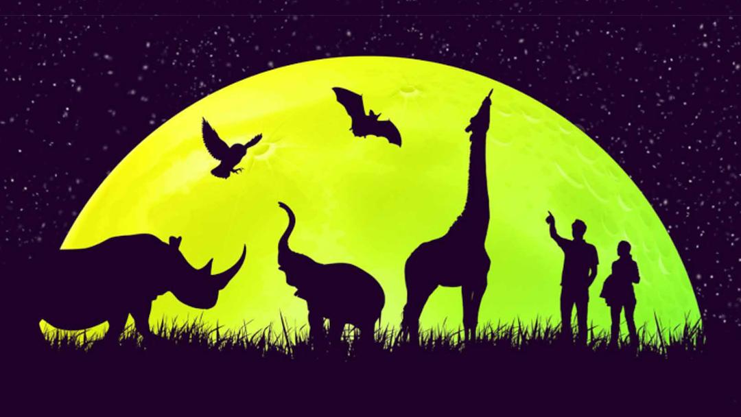 Jön az Állatkertek Éjszakája – 2021. augusztus 27.