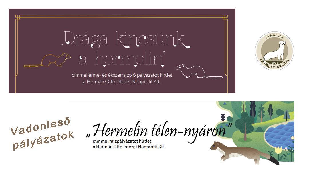 Vadonleső kreatív pályázatok a hermelinről